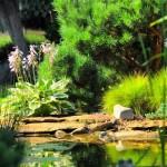 עיצוב גינות: דשא בגינה מעוצבת